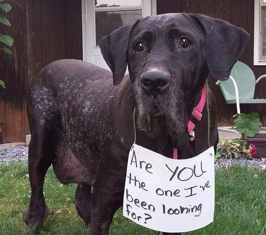 sign dog